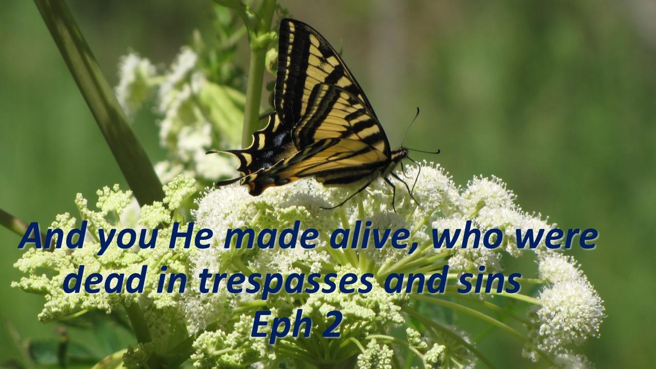 alive in him